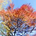神代植物公園【雑木林付近の紅葉】8銀塩