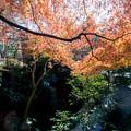 【深大寺付近の紅葉】5