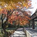 神代植物公園【バラ園テラス付近の紅葉】1