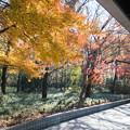 神代植物公園【バラ園テラス付近の紅葉】2