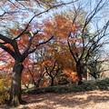 神代植物公園【築山付近の紅葉】1