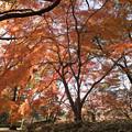 神代植物公園【築山付近の紅葉】2