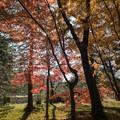 神代植物公園【築山付近の紅葉】3