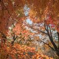 神代植物公園【築山付近の紅葉】4