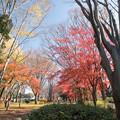 神代植物公園【自由広場付近の紅葉】1
