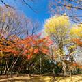 Photos: 神代植物公園【自由広場付近の紅葉】2