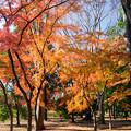 神代植物公園【自由広場付近の紅葉】3