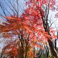 神代植物公園【自由広場付近の紅葉】4