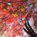 神代植物公園【自由広場付近の紅葉】8