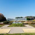 神代植物公園【バラ園の様子】