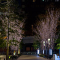 Photos: 東京イルミネーション【大手町仲通り】3