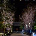 東京イルミネーション【大手町仲通り】3