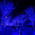 東京イルミネーション【青の洞窟 SHIBUYA】2