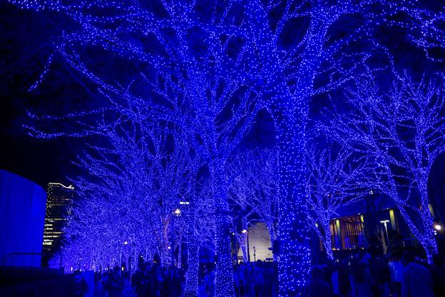 Photos: 東京イルミネーション【青の洞窟 SHIBUYA】3