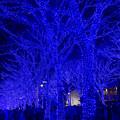 東京イルミネーション【青の洞窟 SHIBUYA】3