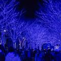 Photos: 東京イルミネーション【青の洞窟 SHIBUYA】4