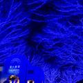 東京イルミネーション【青の洞窟 SHIBUYA】5