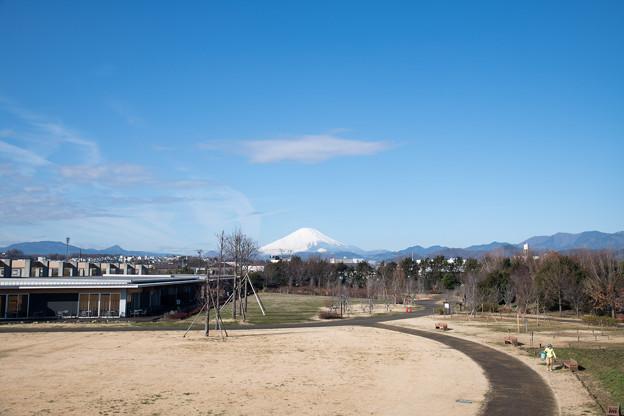 【花菜ガーデンから見る富士山】