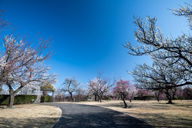 小田原フラワーガーデン【渓流の梅園の眺め】1