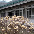 Photos: 早春の新宿御苑【ミツマタ】2