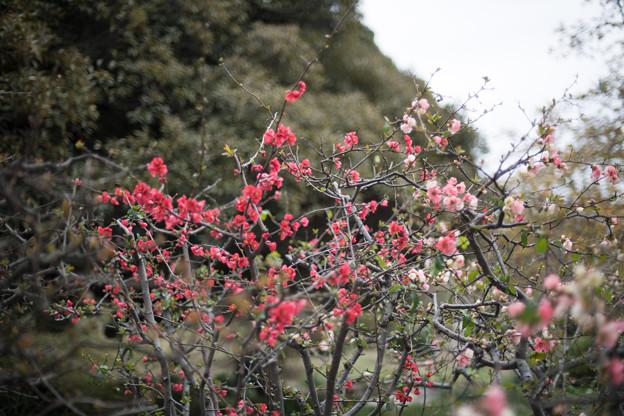 早春の新宿御苑【ボケ】1