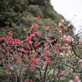 Photos: 早春の新宿御苑【ボケ】1