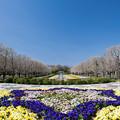 昭和記念公園【この時季のカナール】