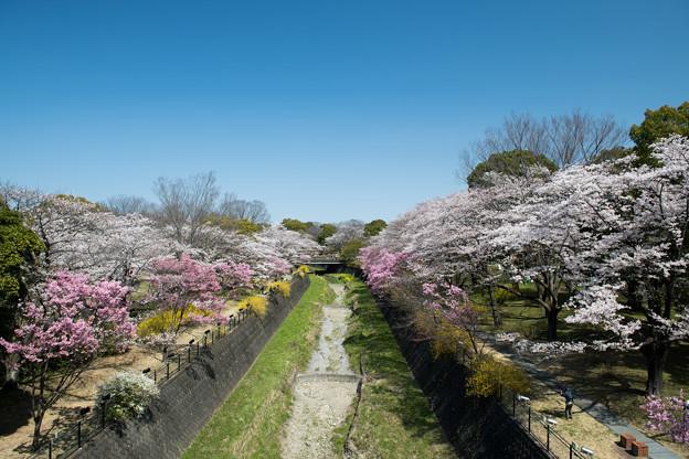 昭和記念公園【朝掘川:ふれあい橋からの眺め】1