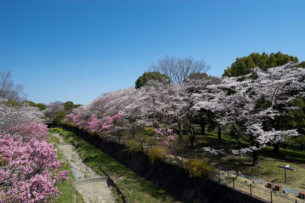 昭和記念公園【朝掘川:ふれあい橋からの眺め】2