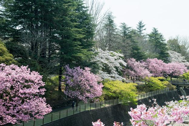昭和記念公園【朝掘川:ふれあい橋からの眺め】3