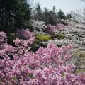 昭和記念公園【朝掘川:ふれあい橋からの眺め】4