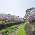 Photos: 昭和記念公園【朝掘川:さくら橋からの眺め】
