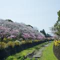 Photos: 昭和記念公園【朝掘川:さつき橋からの眺め】