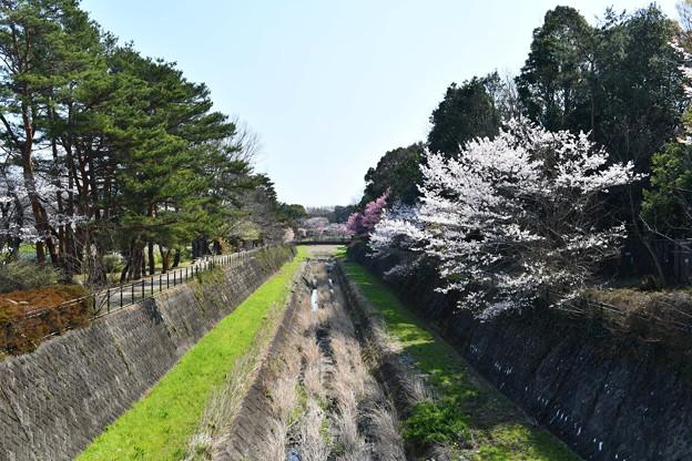 昭和記念公園【朝掘川:もみじ橋からの眺め】