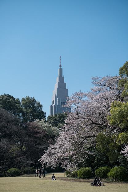 新宿御苑【庭園の眺め】2