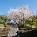 Photos: 近所のサクラ【テリタビーズ公園】1