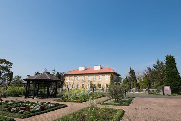 春の花菜ガーデン【チャベックの家と庭】