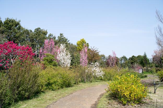 春の花菜ガーデン【春告げの小道: ハナモモ】3