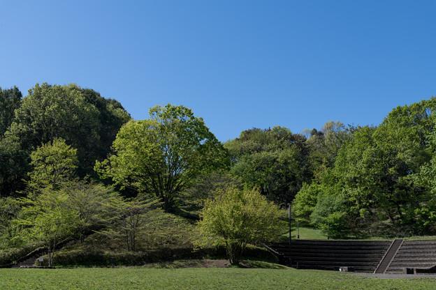 【新緑の四季の森公園】3