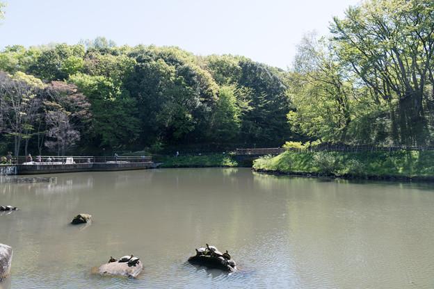 【新緑の四季の森公園】5