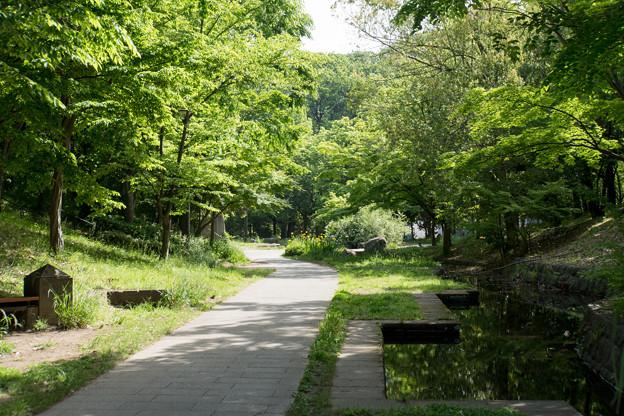 早朝ウォーキング【ささぶねの道:緑道】2