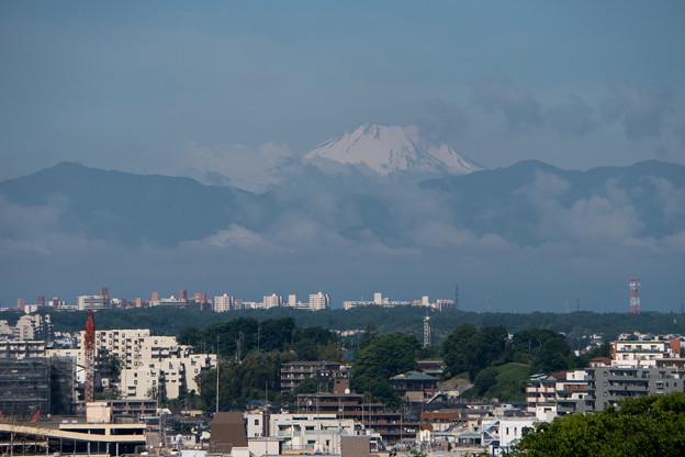 早朝ウォーキング【横浜北西線脇:富士山】