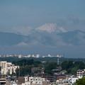 Photos: 早朝ウォーキング【横浜北西線脇:富士山】