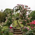 Photos: 荏子田太陽公園【バラが結ぶ小径】2