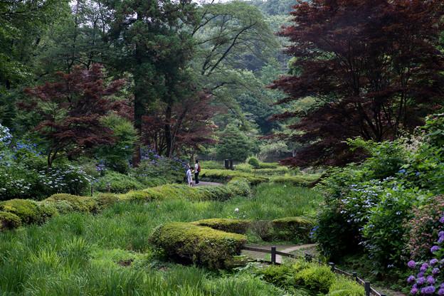 薬師池公園【アジサイの景色】1