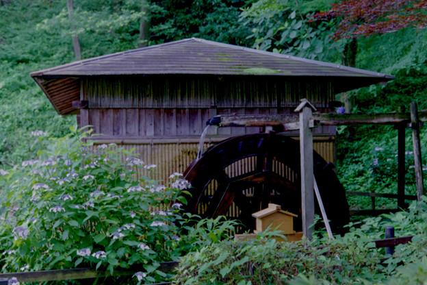 薬師池公園【水車とアジサイ】3銀塩