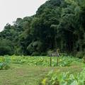Photos: 中井蓮池の里【蓮池の眺め】1