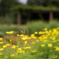 Photos: 花菜ガーデン【キバナコスモス】