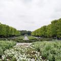 Photos: 昭和記念公園【カナールの眺め】