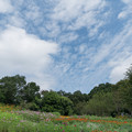 里山ガーデンフェスタ【大花壇の眺め】1